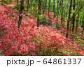 ヤマツツジの森 64861337