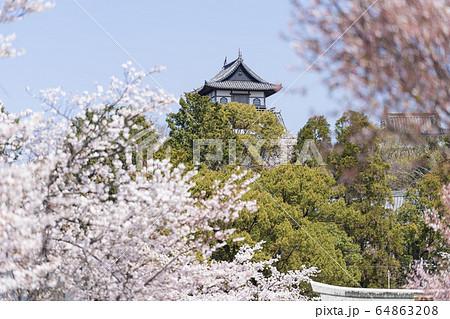 桜の季節の犬山城 城下町から 64863208