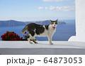 サントリーニ島のネコ 64873053