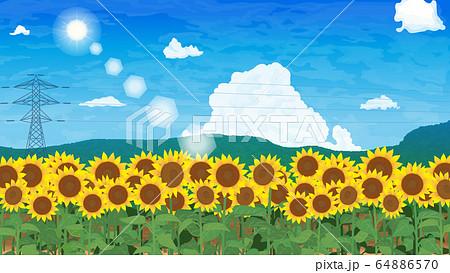 ヒマワリと青空の風景 64886570