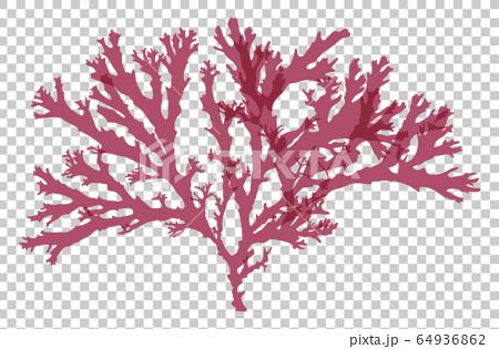 海藻紅藻矢量素材土坂 64936862
