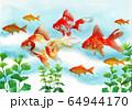 水彩で描いた泳ぐ金魚 64944170
