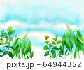 水彩で描いた水中の水草 64944352