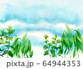 水彩で描いた水中の水草 64944353