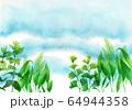 水彩で描いた水中の水草 64944358