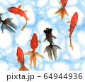 水彩で描いた泳ぐ金魚 64944936