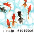 水彩で描いた泳ぐ金魚 64945506
