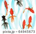 水彩で描いた泳ぐ金魚 64945673