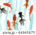 水彩で描いた泳ぐ金魚 64945675