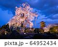 京都・東寺 しだれ桜 64952434