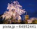 京都・東寺 しだれ桜 64952441