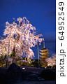 京都・東寺 しだれ桜 64952549