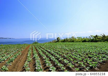 畑(春) 64955238