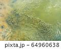 風景 チア 淡水 64960638