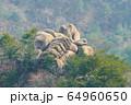 環境 自然 奇岩怪石 64960650