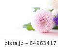 背景用 切り花 菊 64963417