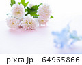 背景用 切り花 菊 64965866