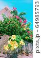 南国植物のアラマンダとブーゲンビレア、青空と家 64985793