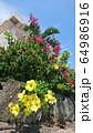 南国の植物ブーゲンビリアとアラマンダ、青空と家 64986916