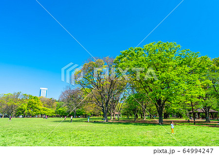 東京 春の代々木公園 64994247