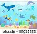 海の生き物_ダイバー_手描き 65022653