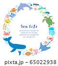 海の生き物_フレーム 65022938