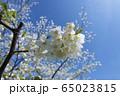 桜と青空 65023815