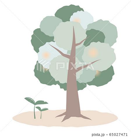 木と芽の成長のイメージ 65027471