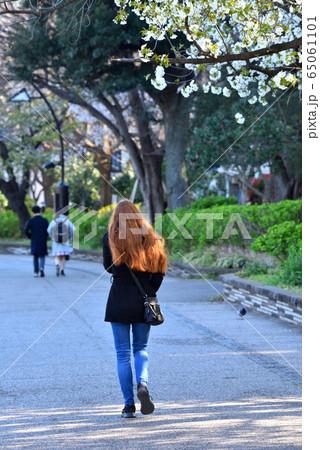 上野公園で桜の下を歩く外国人女性 65061101