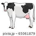 ホルスタイン乳牛イラスト 65061879