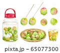 梅のセット 梅の実 梅酒 水彩イラスト 65077300