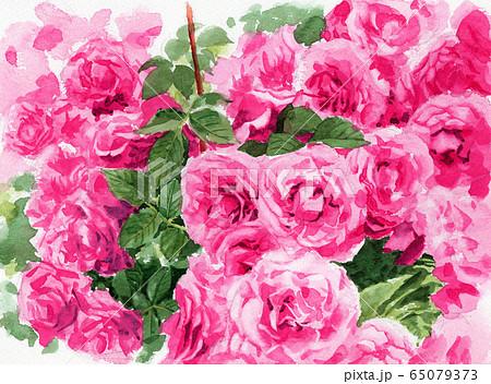 水彩で描いたピンクのバラの植え込み 65079373