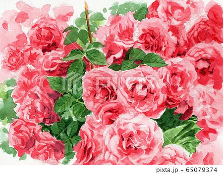 水彩で描いたピンクのバラの植え込み 65079374