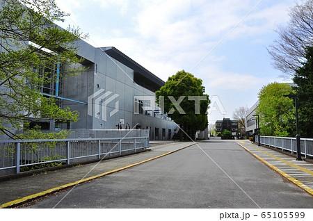神奈川県立スポーツセンター スポーツアリーナと新緑 65105599