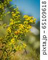 Orange butterfly on yellow flowers 65109618