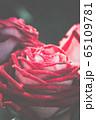 Big red rose macro 65109781