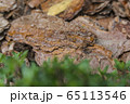Tree bark for decoration and mulching in landscape design. Tree bark texture macro background close-up. 65113546