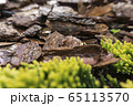 Tree bark for decoration and mulching in landscape design. Tree bark texture macro background close-up. 65113570