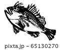 おこぜ 水彩画 65130270