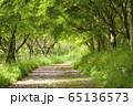 新緑に囲まれた小道 横位置 65136573