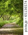 新緑に囲まれた小道 縦位置 65136574