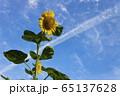 花_ひまわり 65137628