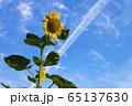 花_ひまわり 65137630