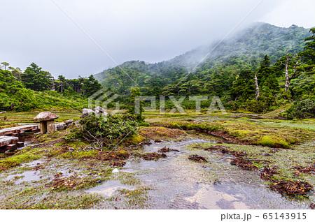 世界自然遺産屋久島高層湿原花之江河(6月)梅雨の頃 65143915