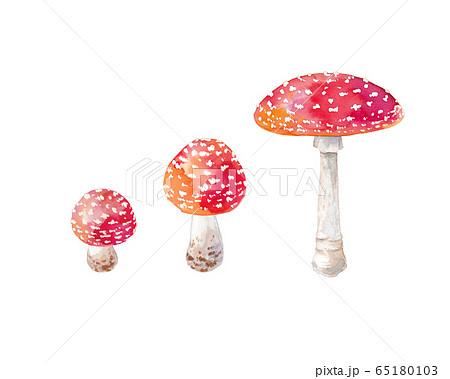 赤いキノコ、ベニテングダケの水彩イラスト 65180103
