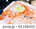 金魚すくい 65188402
