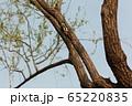 アカゲラ 赤豚木鳥 65220835