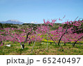 春の丹霞郷 65240497
