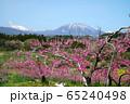 春の丹霞郷 65240498