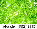 新緑 65241883